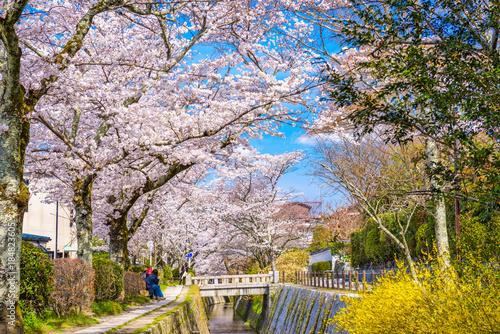 Fotobehang Tokyo Kyoto, Japan in spring.
