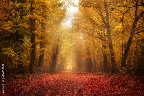 Aluminium Prints Autumn Waldlichtung im Herbst