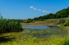 Green Algae On Surface Of The ...