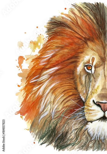 Photo Watercolor drawing of an animal mammal animal predator of a red lion, red mane,