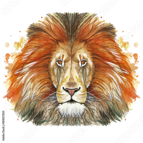 Fototapety, obrazy: Watercolor drawing of an animal mammal animal predator of a red lion, red mane, lion-king of beasts, portrait of greatness, strength, kingdom, india, in front of a white background