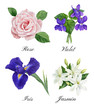 Set of watercolor illustrations of floral perfume notes: violet, rose, iris, jasmin