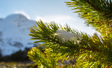 Closeup Photo Of Pine Tree Branches And Snow With Blurred Mountain Background
