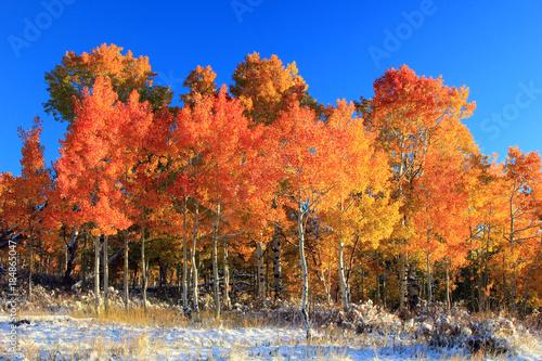 Keuken foto achterwand Rood traf. Fall splendor in the Wasatch Mountains, Utah, USA.