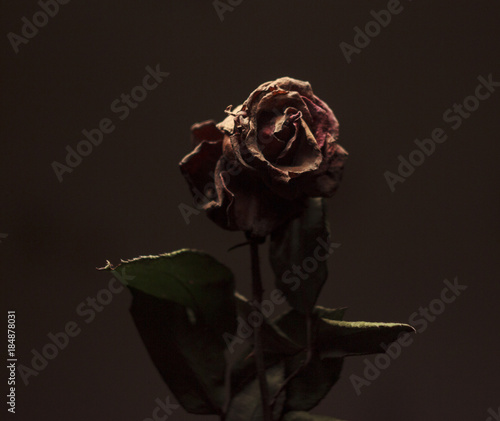 Fotografía  withered rose flower