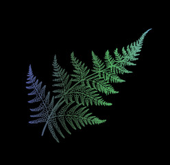 Obraz na Szkle Liście Color gradient fern illustration. Ancient plant at black background.