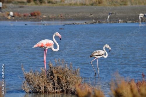 Foto op Aluminium Flamingo Flamingo in Lady's Mile Limassol