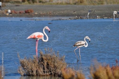 Garden Poster Flamingo Flamingo in Lady's Mile Limassol