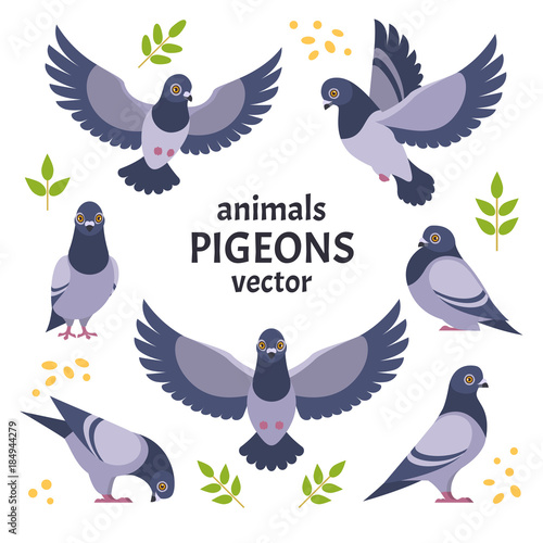 Pigeons collection. Vector illustration of grey cartoon pigeon in different poses. Isolated on white background. Wall mural