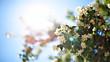 jasmine bush in sunlight