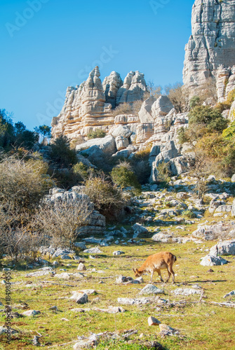 Foto  Panoramic aerial top view of mountains stones of El Torcal natural park,a lot of trees and wild goat greezing near the path on sunny winter day, Malaga province, Andalusia, Spain