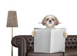 Cute dog with pencil reading newspaper with space for text on sofa in living room. Isolated on white
