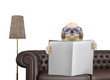 Shitzu dog with glasses reading newspaper with space for text on sofa in living room. Isolated on white