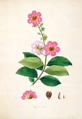 Panel Szklany Botaniczne Botanical illustration