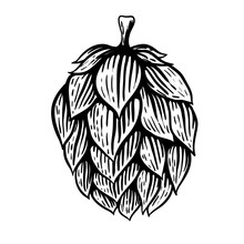 Beer Hop Illustration In Engraving Style Isolated On White Background. Design Element For Logo, Label, Emblem, Sign, Poster, Label.