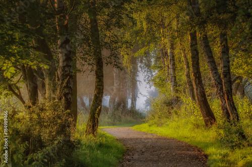 Fototapeten Wald Landscape Flevoland Netherlands