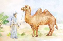 Egypt  Scene With Camel And C...