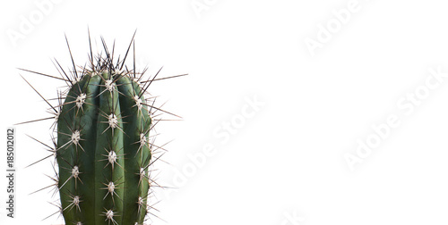 Fotobehang Cactus Succulent cactus isolated on white background