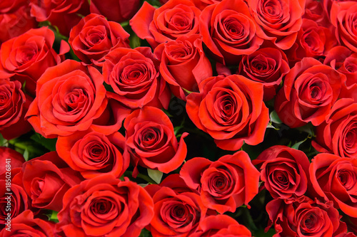 Background of many red roses. Scarlet luxury rose close. Noble holiday flowers for a gift. Romantic love symbol - the most beautiful flowers.  #185026841