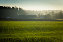 Agricultural Field With Sown G...