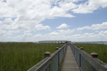 Pier In The Swamp
