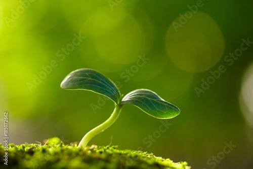 Fotografía close up of spring bud growing with copy space