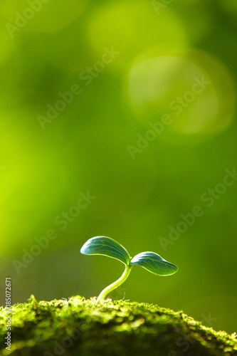 Photo close up of spring bud growing with copy space