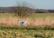 Drohne fliegt über Felder und in der Landschaft