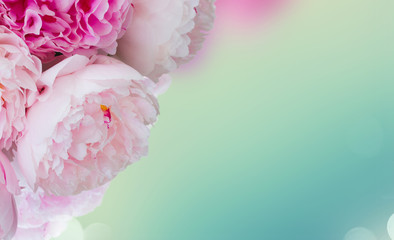 Panel Szklany Peonie Fresh pink peony flowers over blue bokeh background banner