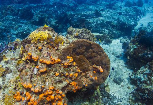 Staande foto Koraalriffen Colorful coral reef