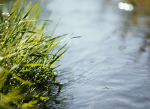 Close Up Of Water Stream With Fresh Plant, Spring Concept.