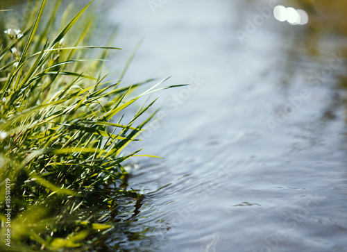 Fotografija Close up of water stream with fresh plant, spring concept.