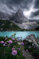 Obraz na Szkle Optyczne powiększenie Flowers under cloudy sky