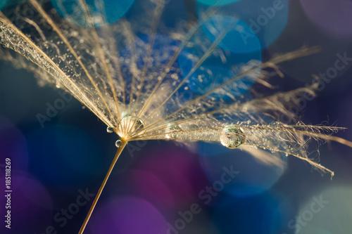 dandelion-ziarno-z-woda-opuszcza-na-kolorowym-bokeh-tle-selektywne-skupienie