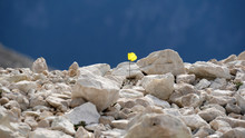 Fiore Giallo Solitario Tra Le ...