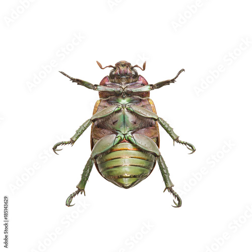 Close-up of upside down beetle over white background Poster