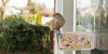 Wild Bird Lands Window Feeder ...