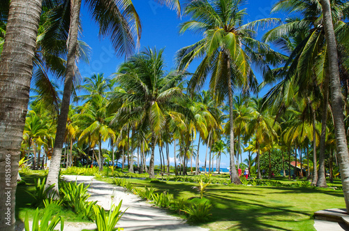 Palm trees in Johnny Cay, Island of San Andres, Colombia Wallpaper Mural
