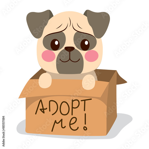Cute little pug dog inside cardboard box with adopt me text Canvas Print