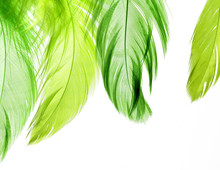 Natural Background Of Bright Green Feathers On A White Isolated