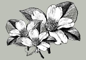 Plakat Vintage bouquet illustration