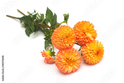 Flowers of beautiful bouquet orange dahlias macro nature isolated on white background. Botanical, concept, flora, idea. Flat lay, top view. Wedding, bride, love