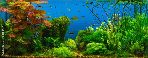 Fotografie, Obraz  Tropical fresh water aquarium