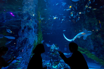 Aquarium with many fishes are usually developed for tourist to have a great view of the underwater life.