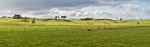 Farm In New Zealand