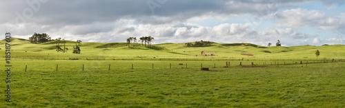 Vászonkép Farm in New Zealand