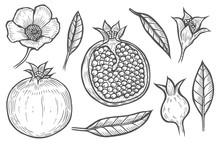 Set Of Pomegranate
