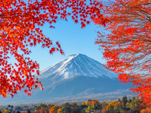 Fuji Mountain With Red Maple L...