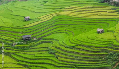 Foto auf Gartenposter Reisfelder Terraced rice field in Northern Vietnam