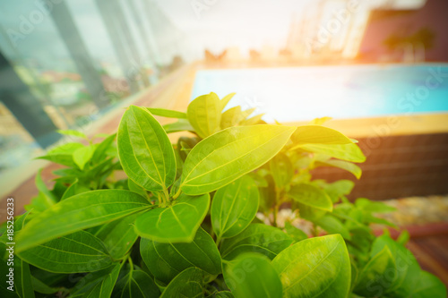 Fotografie, Obraz  Green leaf near swimming pool with sunlight.